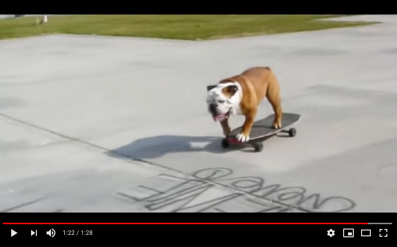Skateboarding Dog on YouTube